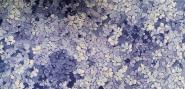 Baumwollstoff (auch für Masken geeignet) - 100% Baumwolle - blaue Blumen